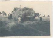 Haymaking at Draycote Hill 1931