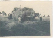 Haymaking at Draycote Hill 1931