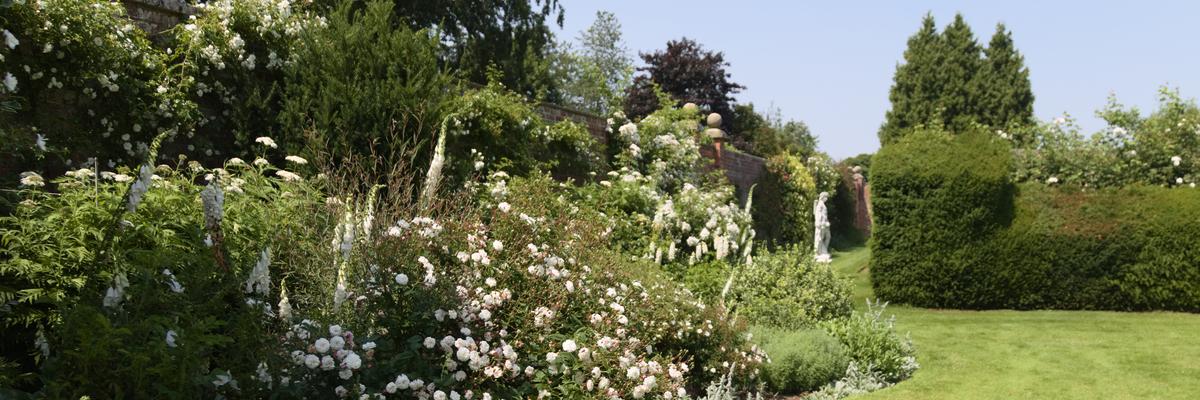 Stoke Albany garden June 2020
